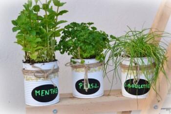 plantes aromatiques à portée de main.jfif